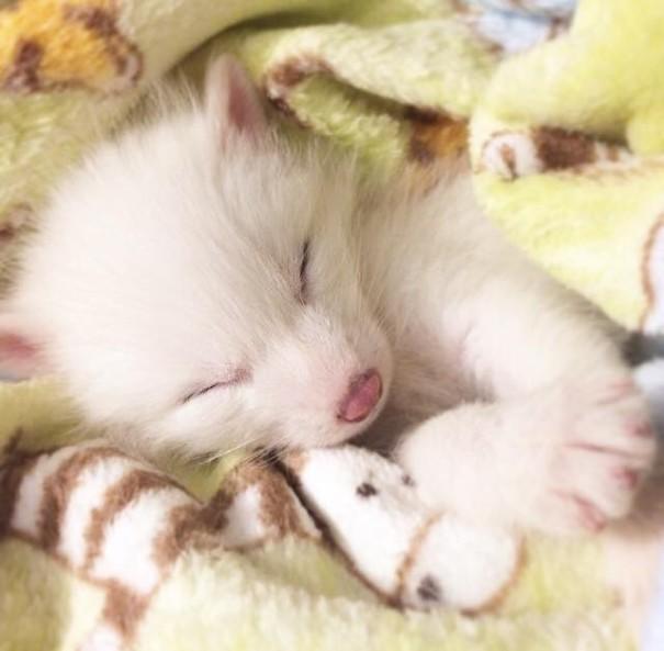 Esta é a bebê raposa mais dorminhoca de todas (5)