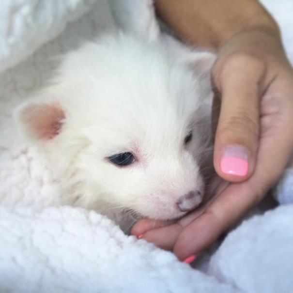Esta é a bebê raposa mais dorminhoca de todas (6)