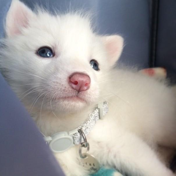 Esta é a bebê raposa mais dorminhoca de todas (8)