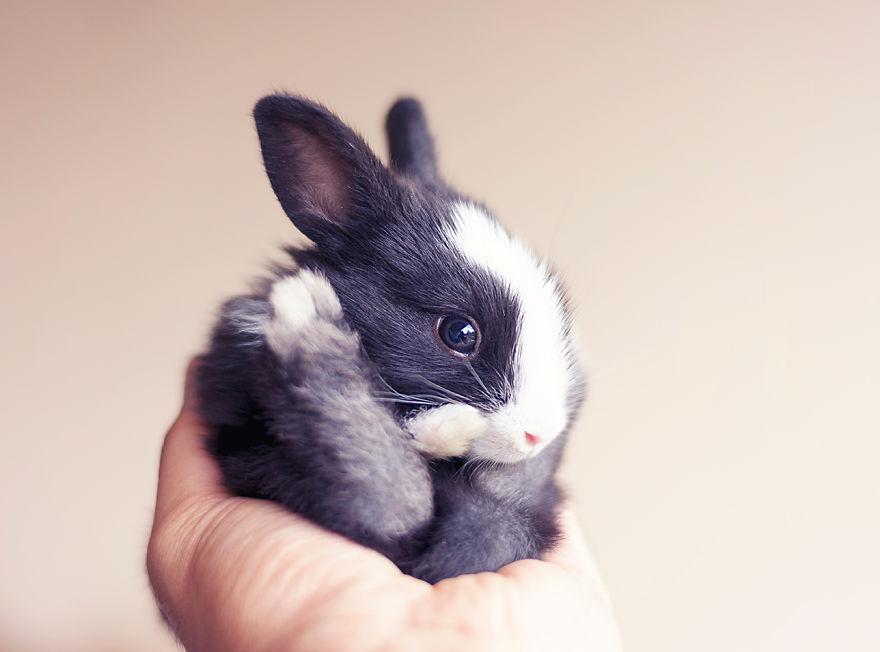 Fotos mostram o crescimento de um coelho (11)