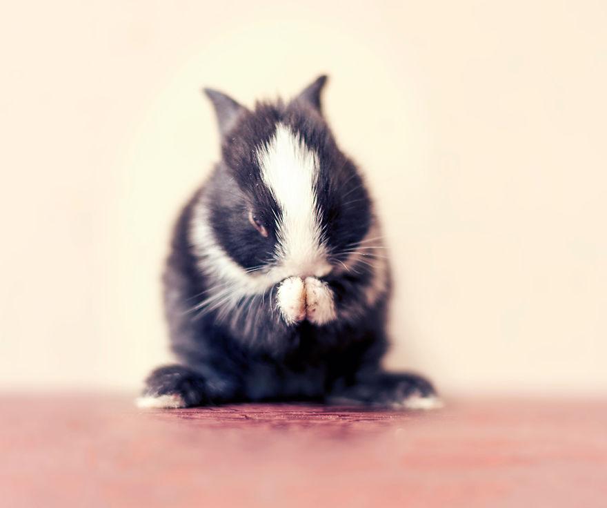 Fotos mostram o crescimento de um coelho (12)