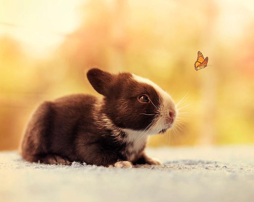 Fotos mostram o crescimento de um coelho (13)