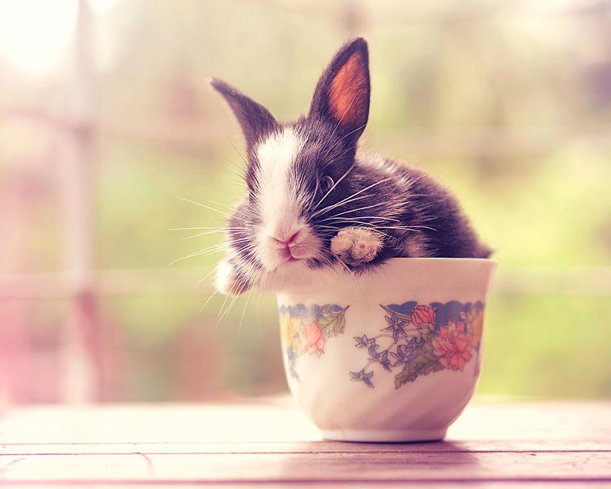 Fotos mostram o crescimento de um coelho (14)