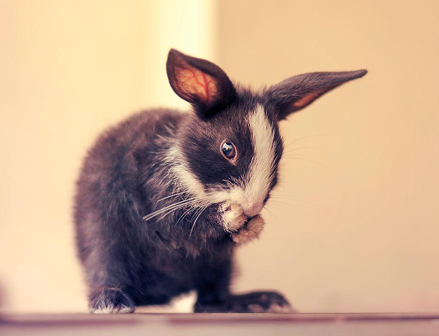 Fotos mostram o crescimento de um coelho (16)