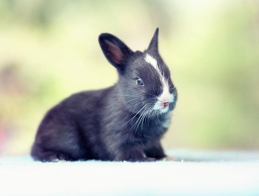 Fotos mostram o crescimento de um coelho (8)
