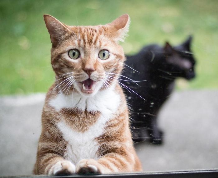 Quando animais são pegos de surpresa (11)
