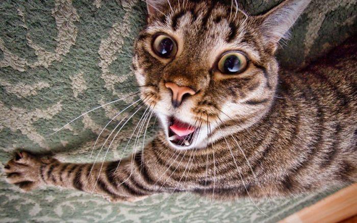 Quando animais são pegos de surpresa (12)