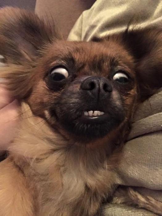Quando animais são pegos de surpresa (20)