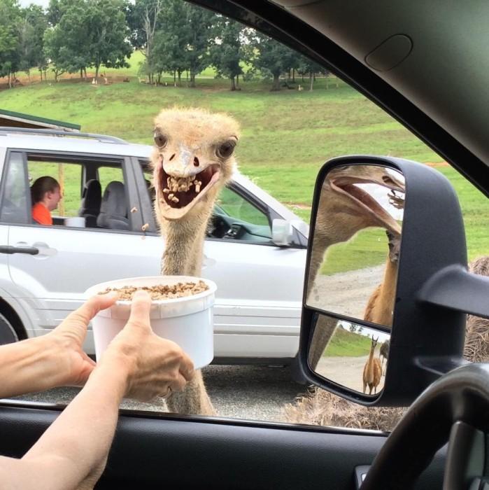 Quando animais são pegos de surpresa (4)