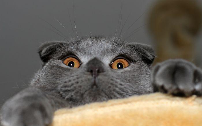 Quando animais são pegos de surpresa (44)