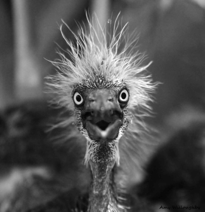 Quando animais são pegos de surpresa (45)