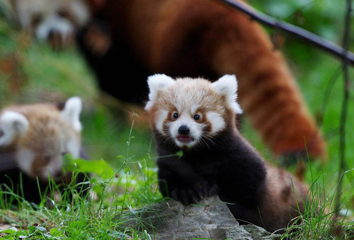Quando animais são pegos de surpresa (6)