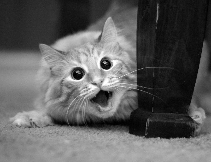 Quando animais são pegos de surpresa (9)