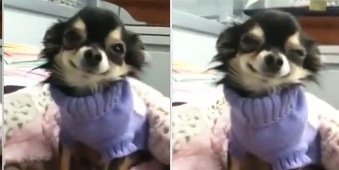 Vídeo-de-cachorrinho-que-sorri