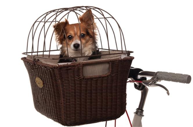 produtos-engenhosos-para-seu-animal-de-estimação (12)