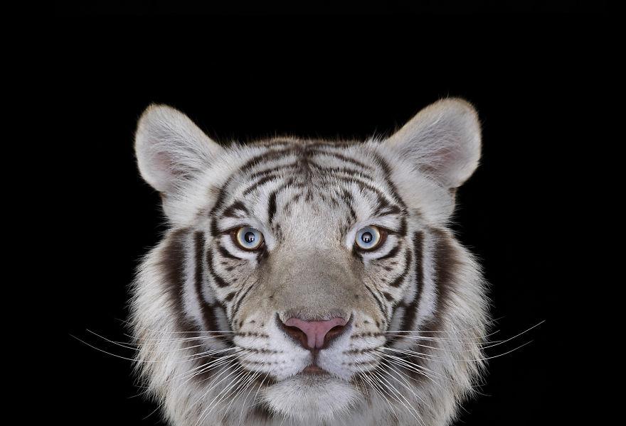 Animais exóticos olhando diretamente para a câmera (14)