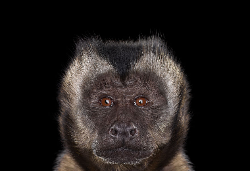 Animais exóticos olhando diretamente para a câmera (3)