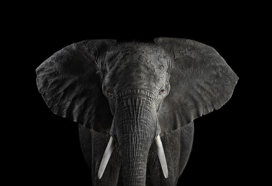 Animais exóticos olhando diretamente para a câmera (7)