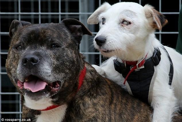 Cachorro-cego-é-resgatado-junto-com-seu-cão-guia-e-amigo-inseparável (2)