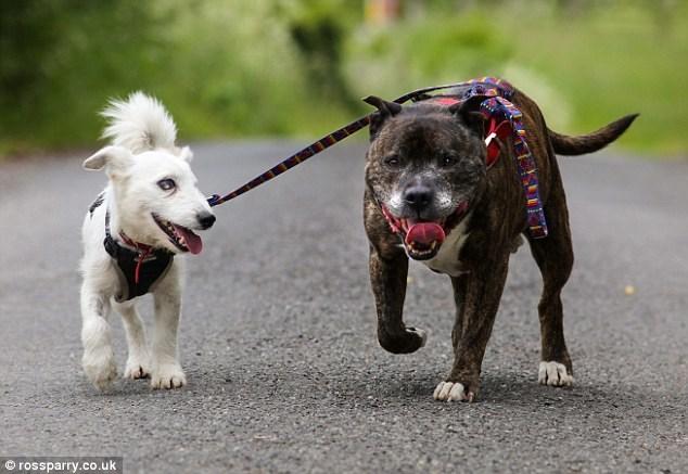 Cachorro cego é resgatado junto com seu cão-guia e amigo inseparável