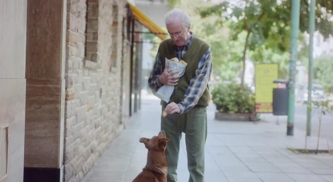 Campanha de doação de órgãos emocionante mostra história de companheirismo entre um cachorro e seu dono