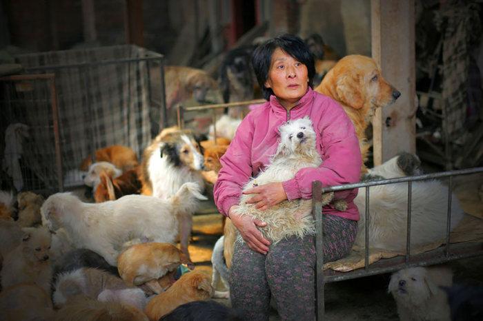 Chinesa viaja 2.500 km para salvar cães de festival de carne de cachorro (1)