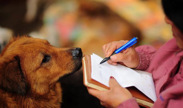Chinesa viaja 2.500 km para salvar cães de festival de carne de cachorro (12)