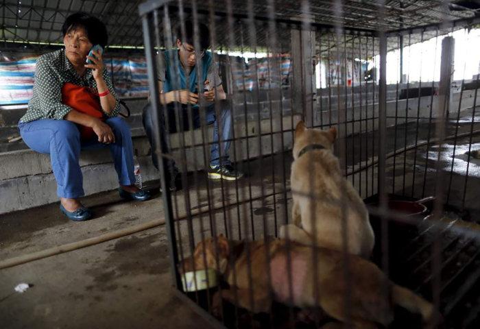 Chinesa viaja 2.500 km para salvar cães de festival de carne de cachorro (13)