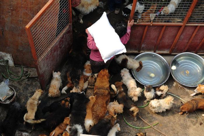 Chinesa viaja 2.500 km para salvar cães de festival de carne de cachorro (15)