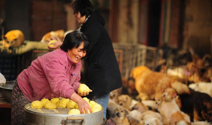 Chinesa viaja 2.500 km para salvar cães de festival de carne de cachorro (2)