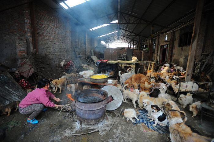 Chinesa viaja 2.500 km para salvar cães de festival de carne de cachorro (3)