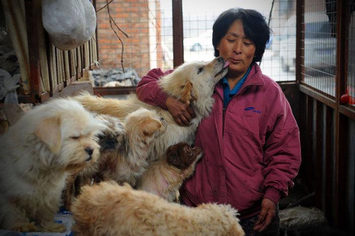 Chinesa viaja 2.500 km para salvar cães de festival de carne de cachorro (4)