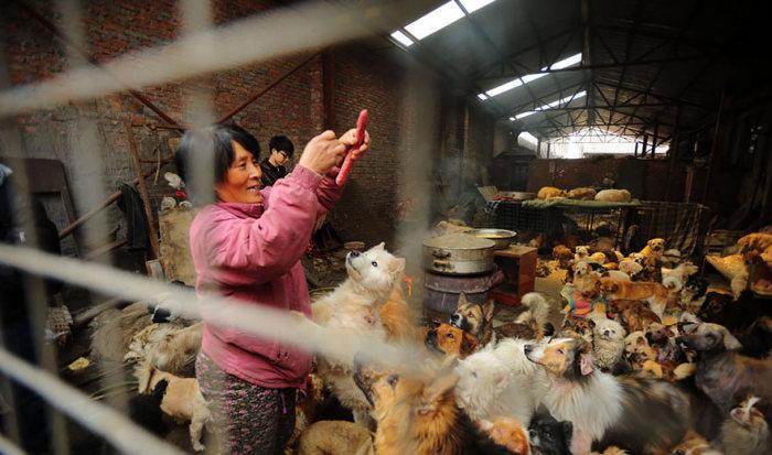 Chinesa viaja 2.500 km para salvar cães de festival de carne de cachorro (8)