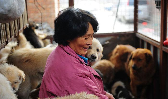 Chinesa viaja 2.500 km para salvar cães de festival de carne de cachorro (9)