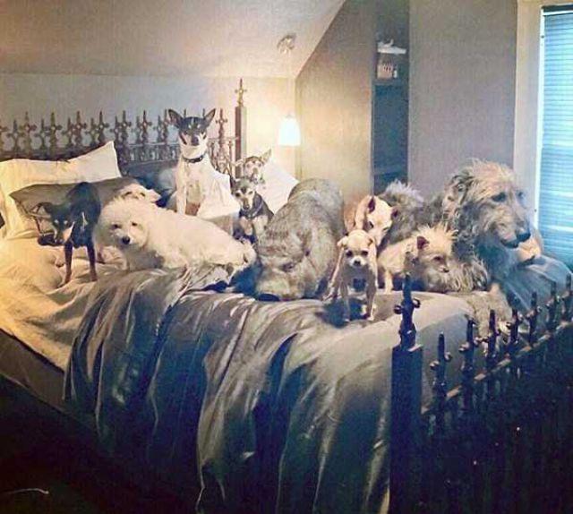 Homem que transformou sua casa em um abrigo de animais