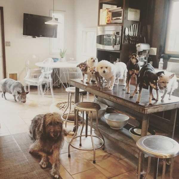 Homem-transformou-casa-em-abrigo-de-animais (2)
