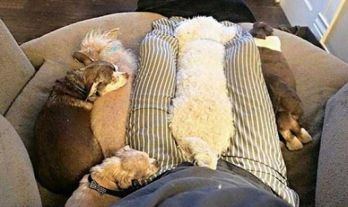Homem-transformou-casa-em-abrigo-de-animais (3)