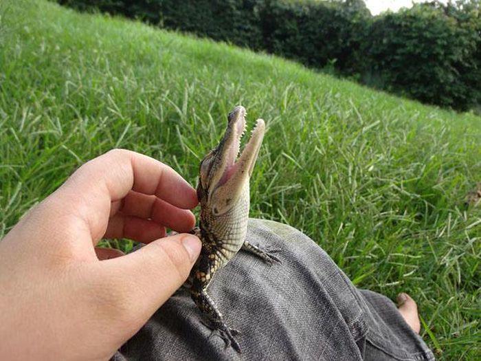 animais-mortais-tem-seus-momentos-de-fofura (2)