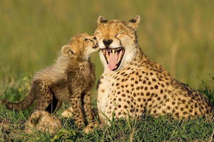 animais-mortais-tem-seus-momentos-de-fofura (3)