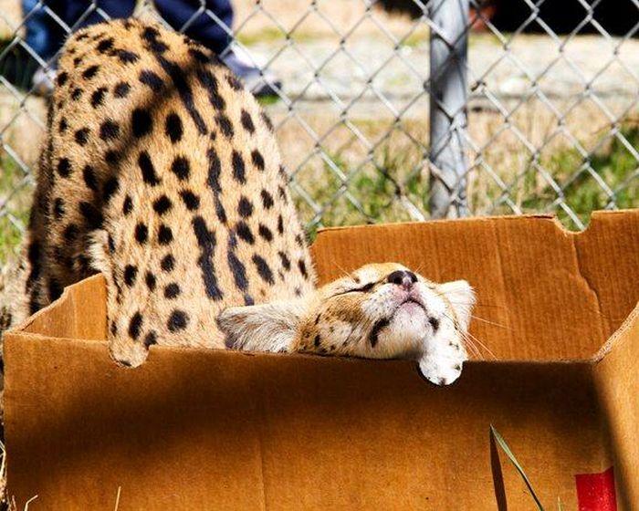 animais-mortais-tem-seus-momentos-de-fofura (8)