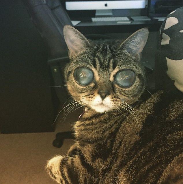 gata-alienígena (10)
