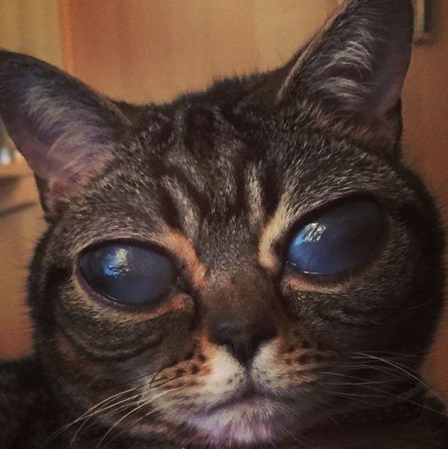 Conheça a gata alienígena que esta encantando a web