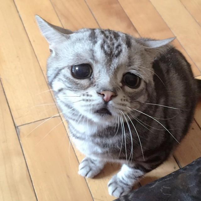 gato-mais-triste-da-Internet (1)