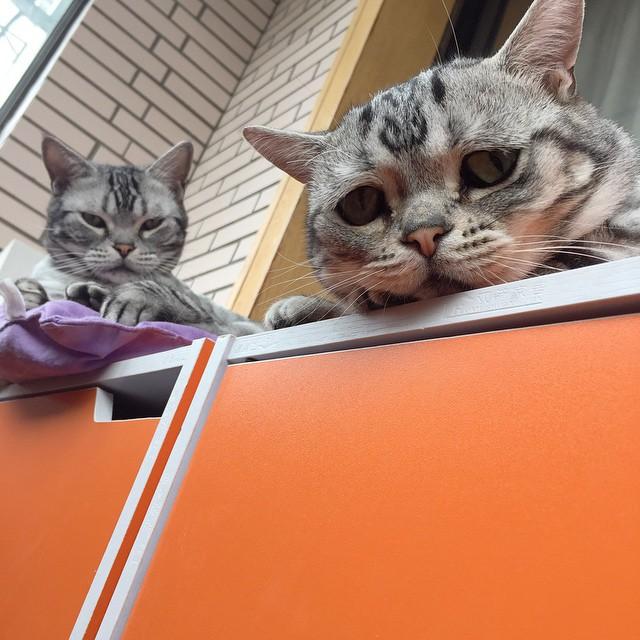gato-mais-triste-da-Internet (11)