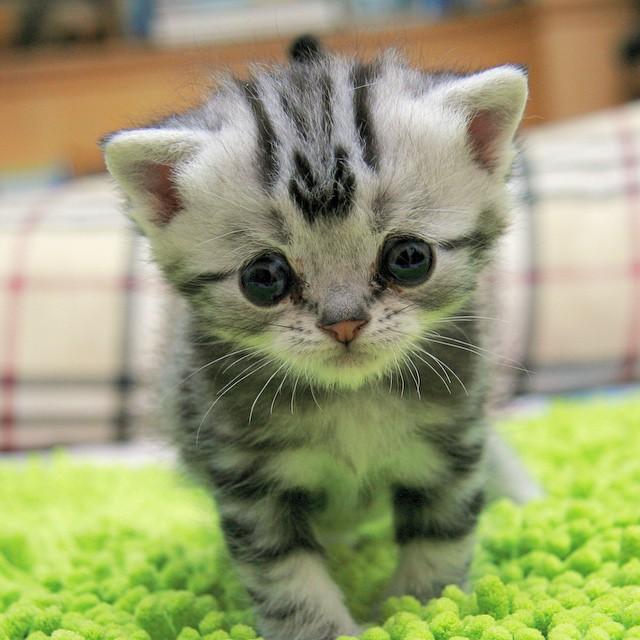 gato-mais-triste-da-Internet (14)