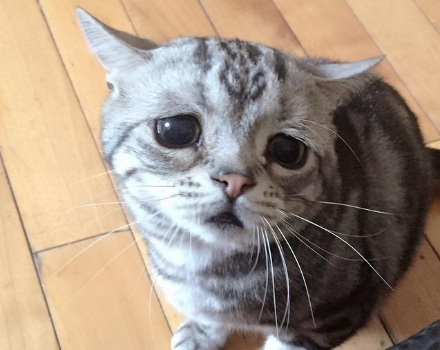 Conheça Luhu, o gato mais triste da Internet