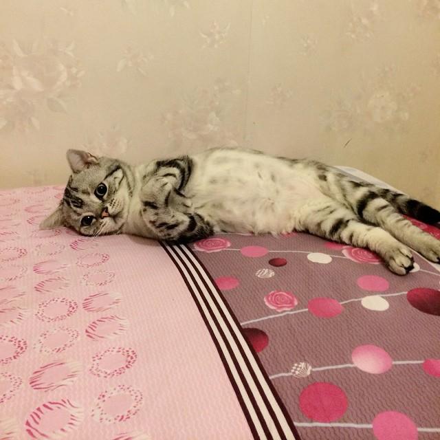 gato-mais-triste-da-Internet (6)