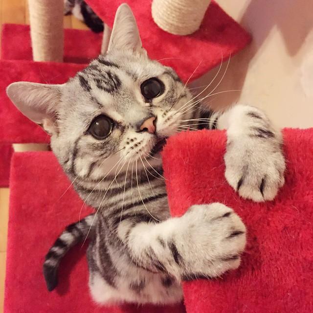 gato-mais-triste-da-Internet (7)