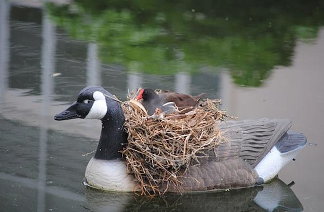 ninhos-de-pássaros-lugares-incomuns (1)