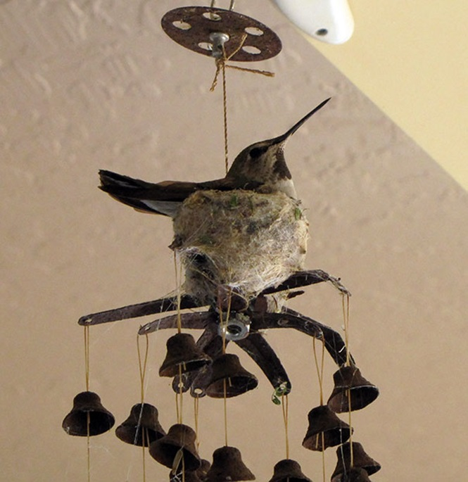 ninhos-de-pássaros-lugares-incomuns (10)